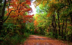 autumn, forest, road, trees, landscape