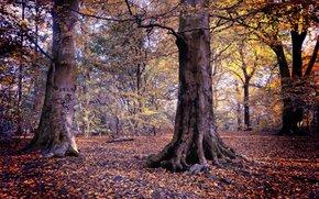 otoño, árboles, bosque, paisaje