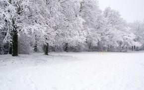 冬天, 树, 景观