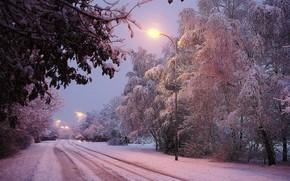 Winter, Straße, Bäume, Beleuchtung, Landschaft, HDR