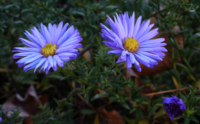 flores azules, Kharkov, Noviembre, farmakademiya