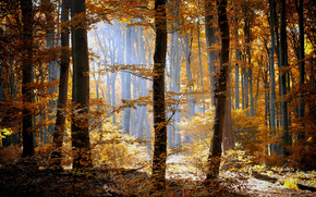 umbrage, forest, nature, trees, grass, foliage, orange, yellow, light, sun