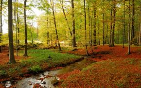 autunno, piccolo fiume, torrente, alberi, foresta, paesaggio