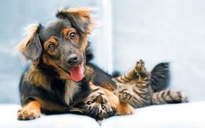 dog, cat, Friends