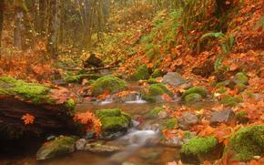 bosque, pequeño río, arroyo, otoño, árboles, follaje, piedras, naturaleza