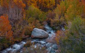 autumn, river, forest, landscape