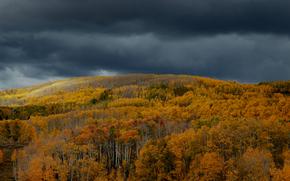outono, floresta, árvores, NUVENS, paisagem