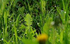 hierba, plantas, gotas, rocío, Macro