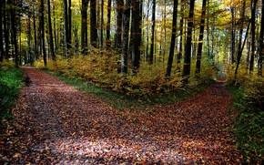 秋, 森林, 树, 叉, 道路, 景观