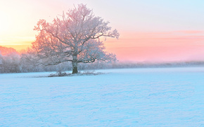 nebbia, albero, nevicata, inverno, sera, gelo
