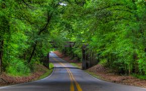 road, trees, bridge, landscape