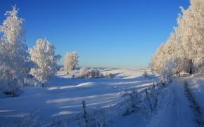 冬天, 道路, 树, 景观