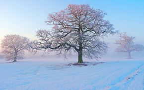 winter, snow, trees, frost, morning, fog, frost