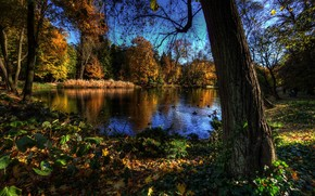 осень, озеро, деревья, птицы, пейзаж
