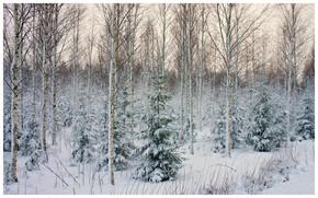 лес, деревья, зима, пейзаж