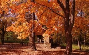 秋, 公园, 树, 景观