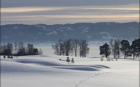 winter, Mountains, trees, snow, traces, landscape