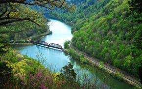 fiume, foresta, alberi, ferrovia, ponte, paesaggio