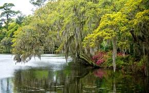 河, 树, 景观