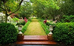 giardino, alberi, Fiori, paesaggio