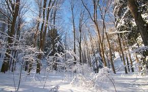 冬天, 森林, 树, 性质, 景观
