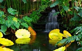 пруд, вода, водопад, парк, растения, пейзаж