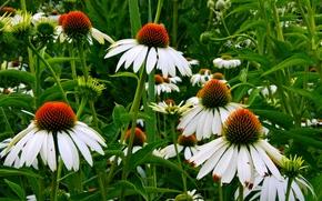 黄春菊, 花卉, 植物群