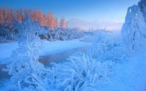 冬天, 黎明, 河, 树, 景观
