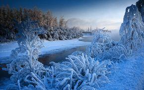冬天, 日落, 河, 树, 景观