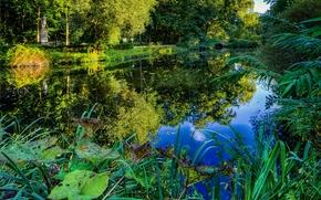 公园, 池塘, 树, 植物, 景观, HDR