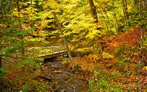 autunno, foresta, piccolo fiume, ponte, alberi, natura