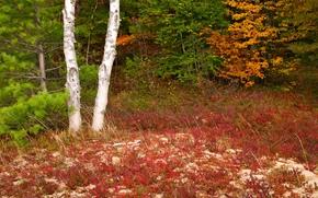 autunno, alberi, foresta, natura