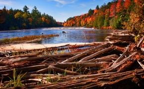río, otoño, árboles, paisaje