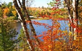 河, 秋, 树, 景观