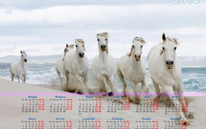 calendar, 2014, year of the horse