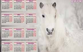 calendar, 2014, year of the horse