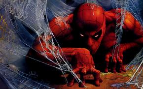 spider man, человек паук, паутина