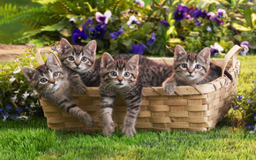 котята, корзина, животные