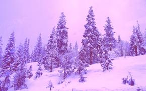 invierno, árboles, paisaje
