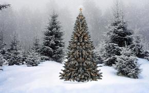 abete, abete rosso, foresta, ghirlanda, luci, stella, nevicata, ornamentazione, Capodanno, vacanza