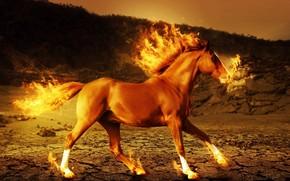 лошадь, огонь, 3d, art