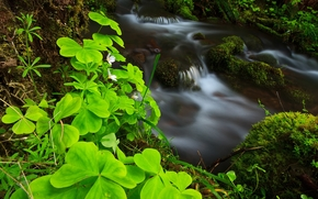 torrente, impianto, natura