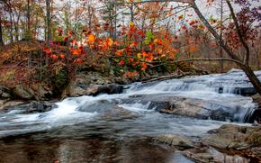 jesień, rzeka, drzew, krajobraz