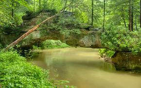 森林, 河, 岩石, 树, 景观