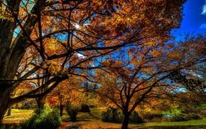 otoño, árboles, parque, paisaje