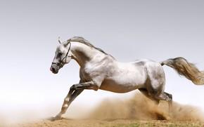 Конь, сила, красота