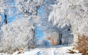 winter, white, snow, forest, snowy, sunny, day, blue, sky, trees