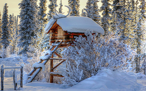 winter, wald, schnee