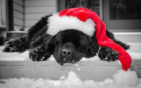 assonnato, cane, cani, animale, Animali, Caldo, nevicata, inverno