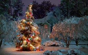 alberi, inverno, notte, nevicata, abete rosso, Capodanno, abete